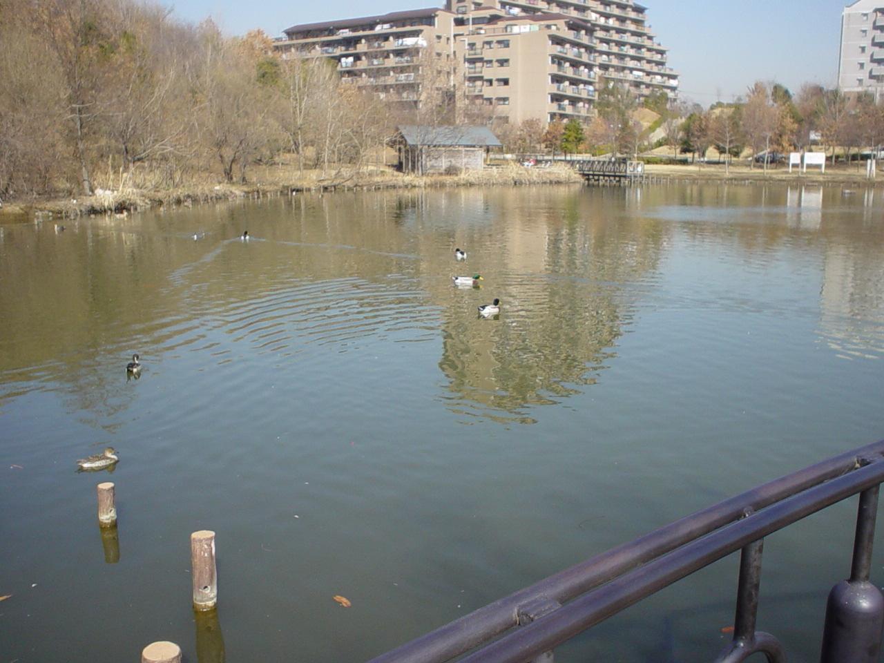 池全体.jpg