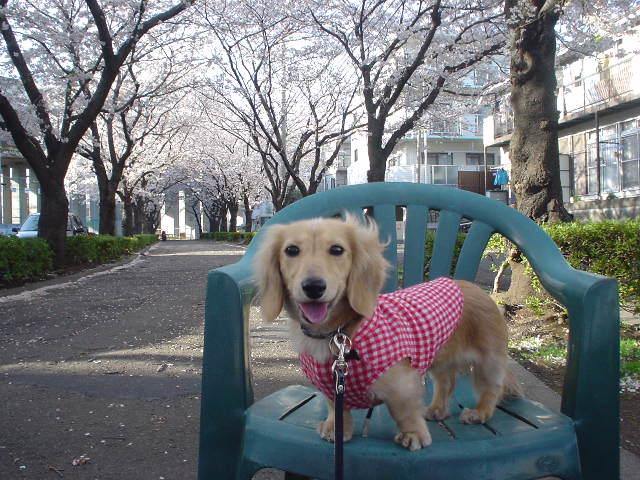 桜並木3.jpg