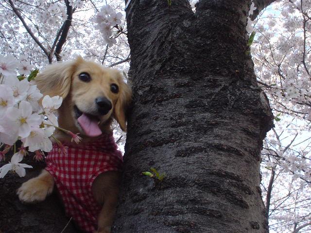 桜並木4.jpg