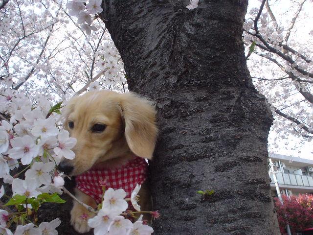 桜並木5.jpg
