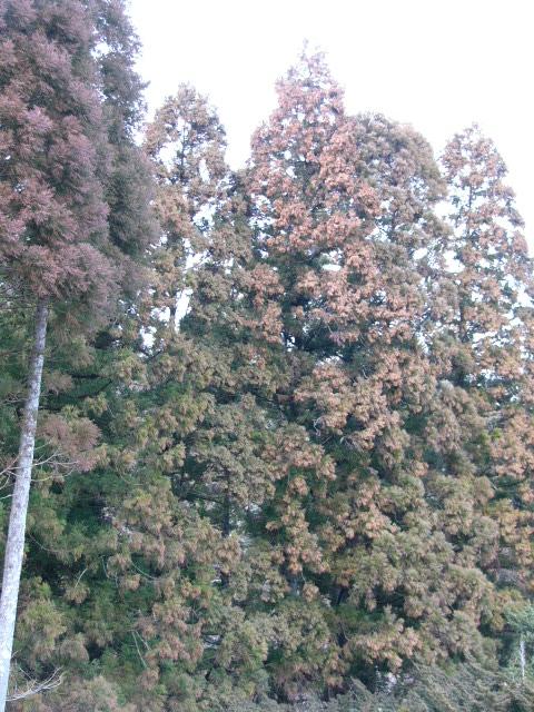 杉858.jpg