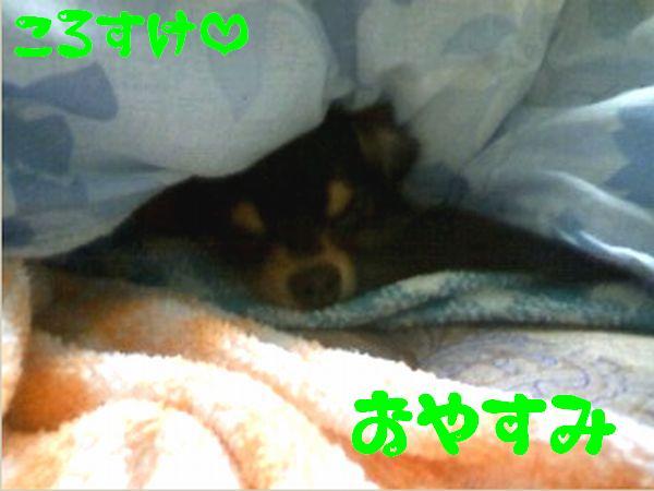 おやすみコロ.jpg