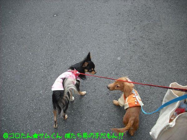 2008お散歩�.jpg