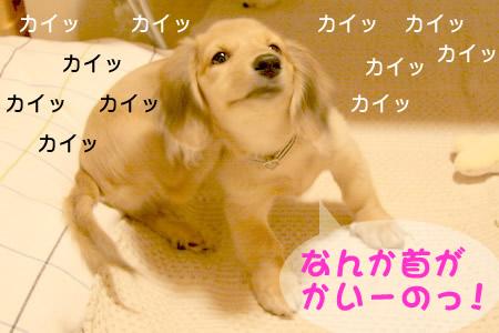 051203かい〜のっ!