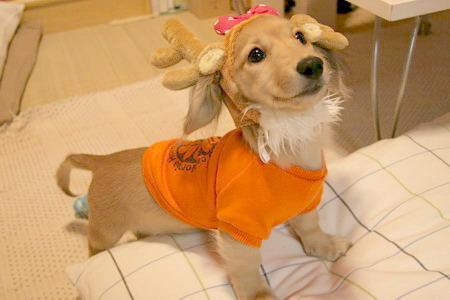 051220トナカイ犬2