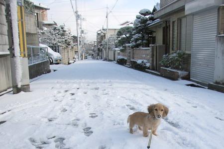 051222雪景色とマロン