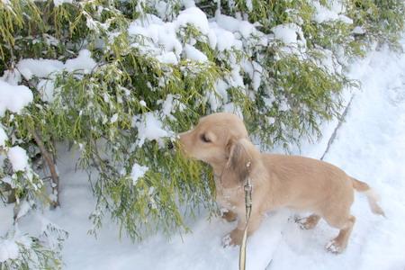 051222雪景色とマロン2