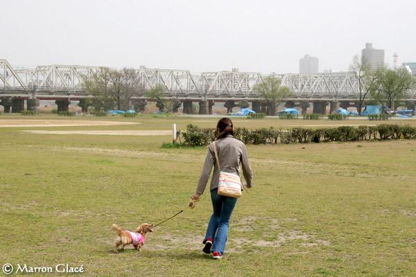 060410淀川河川敷