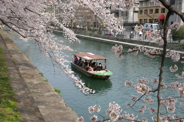 060410平安神宮の桜