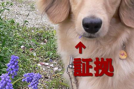 060412花喰らうマロン3
