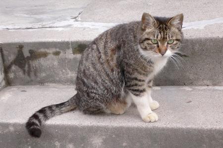 060412猫とご対面