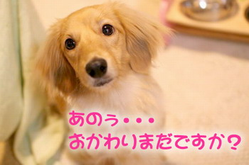 060610おかわり待ち・・・(-_-;)