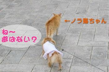 060612猫さん遊ぼ!