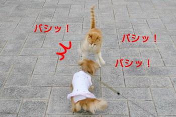 060612衝撃映像、猫パンチ!