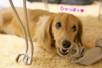 061003靴下カミカミ♪