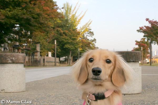 061019上杉神社紅葉始め