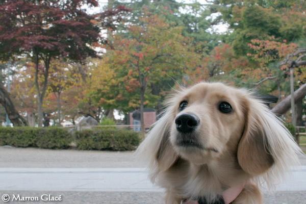 061019上杉神社紅葉始め2