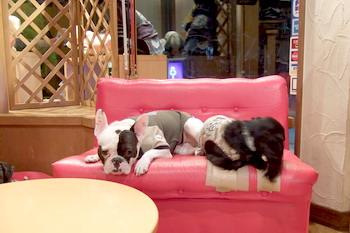 061022dogroom看板犬1