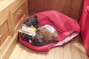 061022dogroom看板犬2