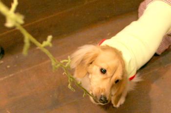 061119マロン苔を食うな〜!