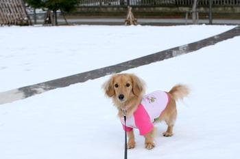 061205雪の上杉公園