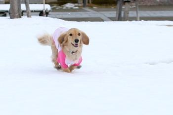 061205雪上を走るマロン!