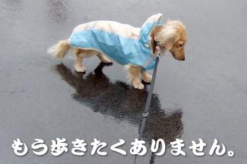 061208雨の日のお散歩1