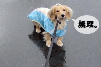 061208雨の日のお散歩2