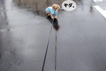 061208雨の日のお散歩3