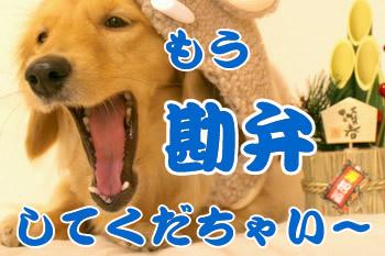 061219マロンさん大あくび(-_-)