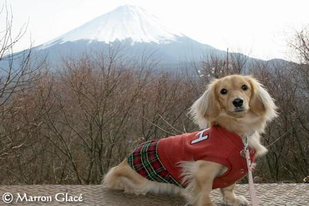 070106マロン富士山をバックに!