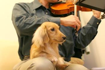 070207旦那のバイオリンとマロン