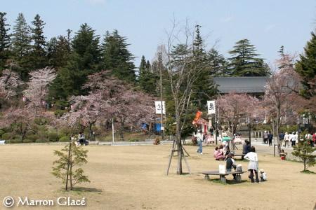 070420上杉神社の桜