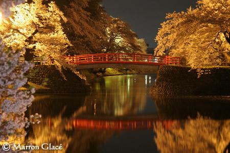 070503上杉神社夜桜