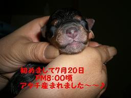 1235.jpg.miyabi