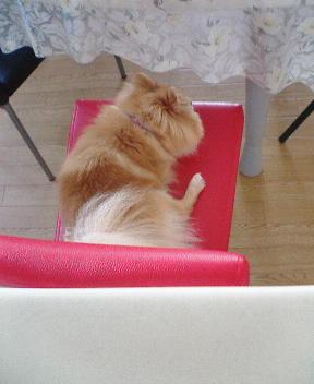 椅子つまんない