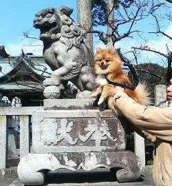 霊犬神社 狛犬と