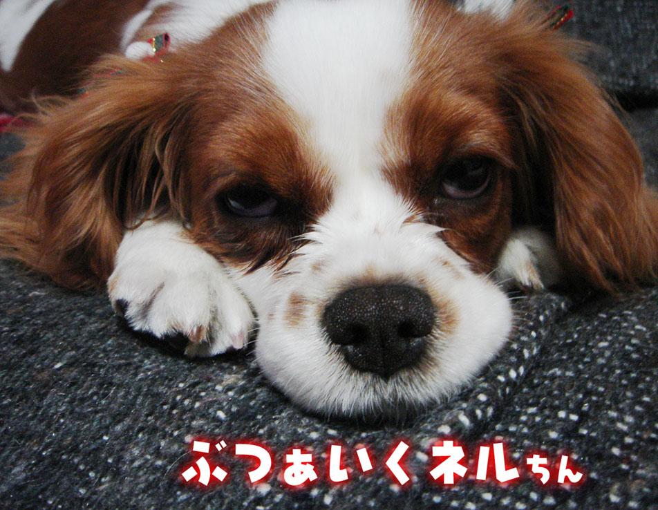 dog.pelogoo.com/nelnoa/pic/1140079399265481.jpg.jpg