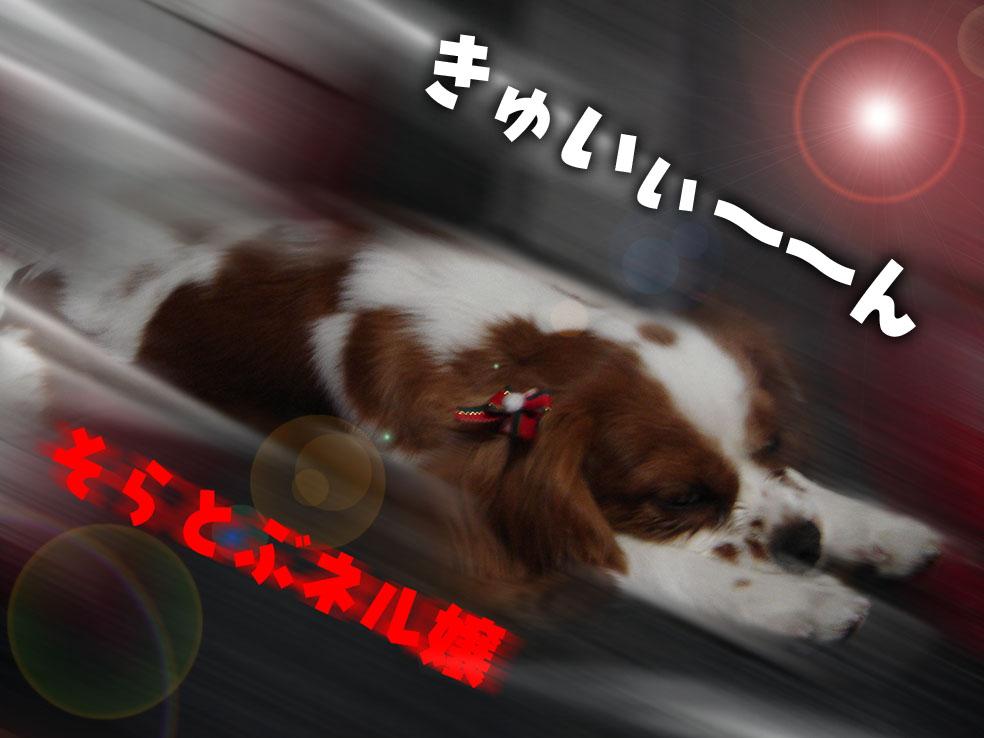 dog.pelogoo.com/nelnoa/pic/1140079422321587.jpg.jpg