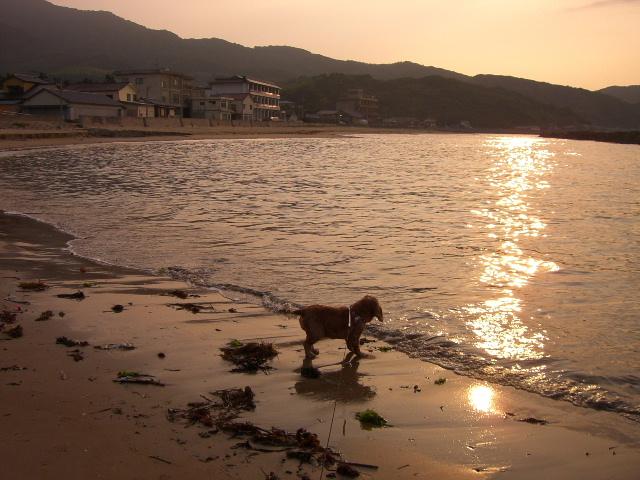 7/7海と夕日.jpg