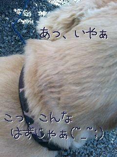 げじげじ.jpg