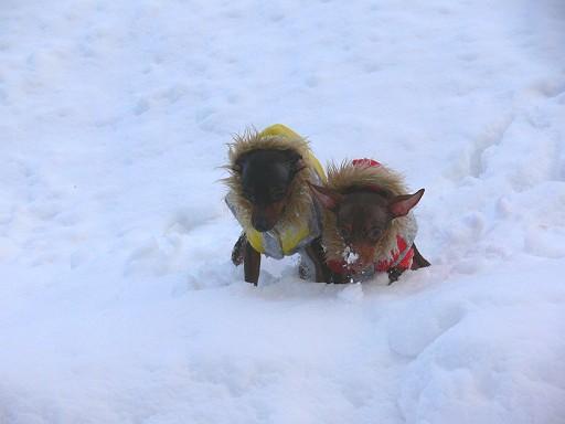 雪中060121