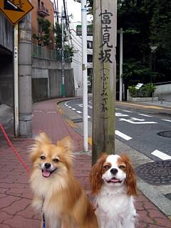 富士見坂1.jpg