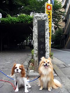 富士見坂4.jpg