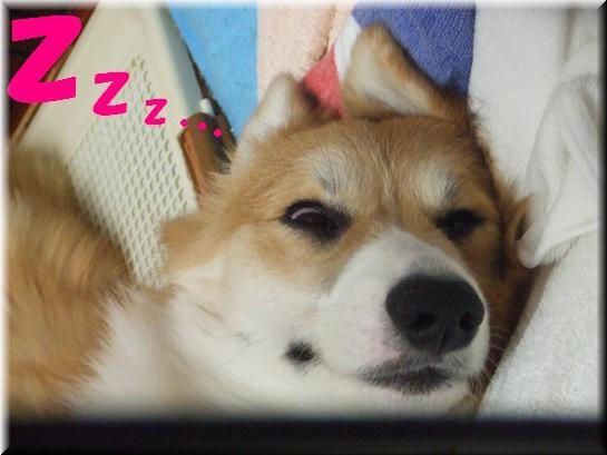寝てますw