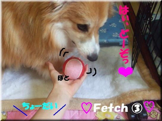 Fetch�