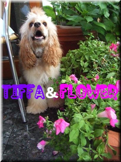 TIFFA&FLOWER