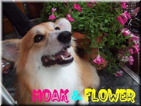 MOKA&FLOWER