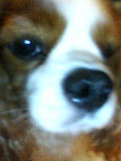 freckles4.jpg