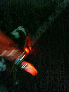 firefly3.jpg